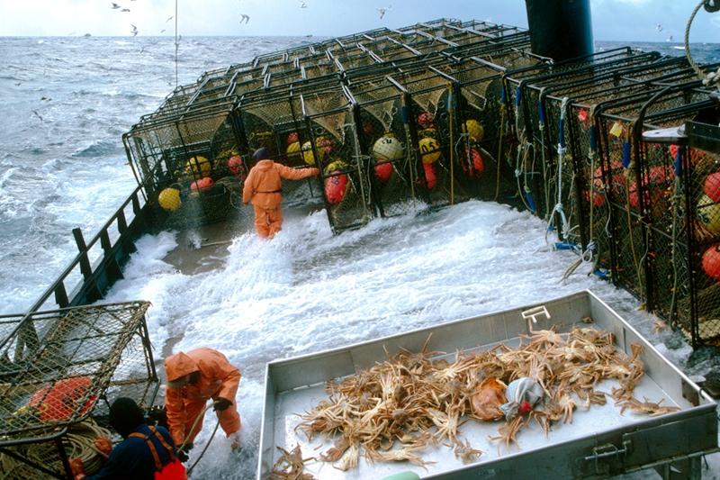 209cr_dc0031_001_mss 环球海鲜产业.jpg